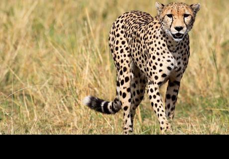 Una familia sale del auto durante un safari y se lleva el susto de su vida