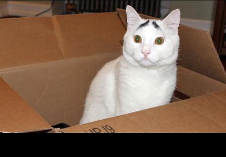 Descubren al gato con el maullido más extraño del mundo