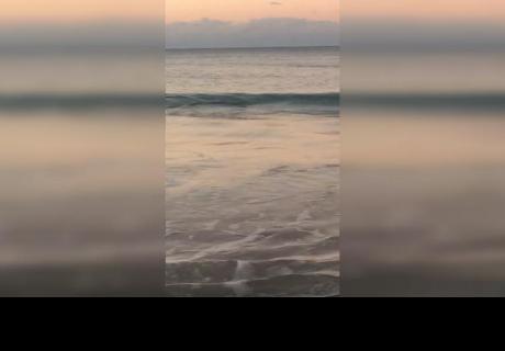 Daba un relajante paseo por una playa, pero encontró algo que le causó pánico