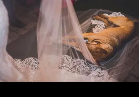 Perro interrumpió un matrimonio y la reacción de los novios asombró a miles