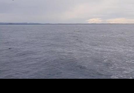Grababa la tranquilidad del mar, pero ocurrió un hecho que asombró a todos