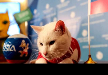 Aquiles, es el nuevo 'oráculo' del Mundial Rusia 2018