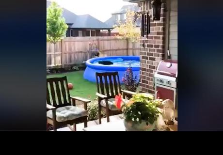 Salió al patio de su casa y se encontró en la piscina a un invitado sorpresa