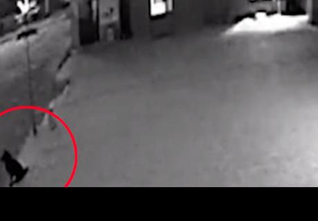 Perrito hace guardia durante fechoría de sus amos y evita que los capturen