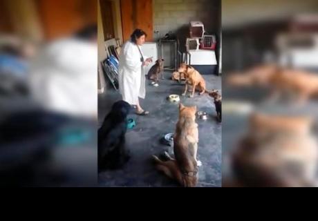 Mujer logra que sus perros recen antes de comer y sorprende a todos en la red