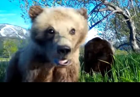 Un osezno se toma un entrañable video 'selfie' en Rusia