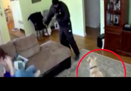 Fingió ser atacada por un ladrón para ver la reacción de su mascota, pero terminó decepcionada
