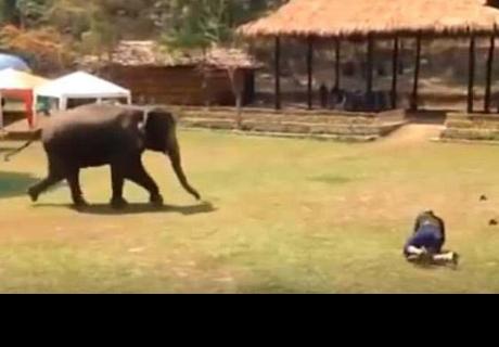 Hombre 'golpea' a cuidador de zoológico y elefante lo defiende
