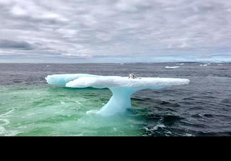 Pescadores vieron que se movía algo encima de un iceberg, se acercaron y descubrieron triste realidad