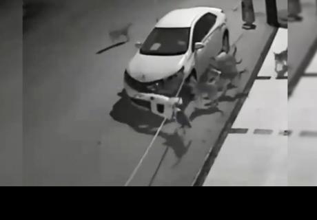 Patea a perro callejero y él regresa con sus amigos para destruir su auto