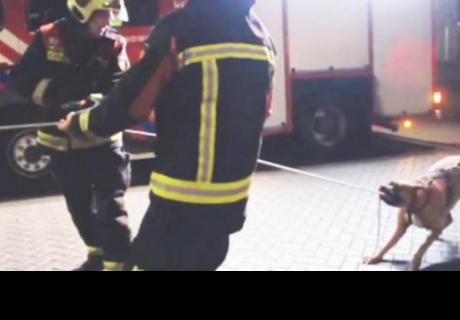 Perro que ayuda a bomberos en una urgencia es sensación en la red