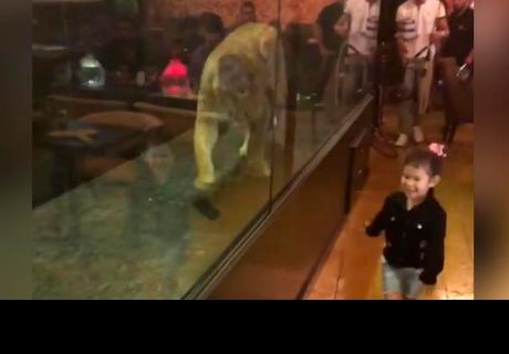 León es encerrado en caja de cristal para entretener a clientes de lujoso restaurante