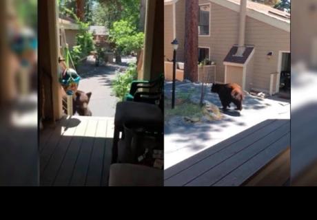 Mujer realiza increíble acción al ver que un oso intenta ingresar a su casa