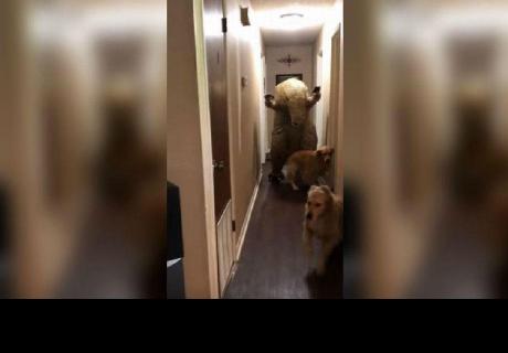 Perros terminaron asustados al ver un 'dinosaurio' en casa