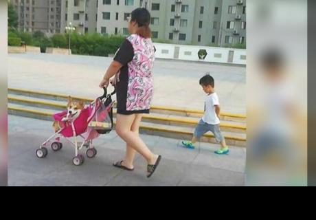Cibernautas quedan impactados al ver a mujer llevando a su perro en coche y a su hijo lo deja de lado