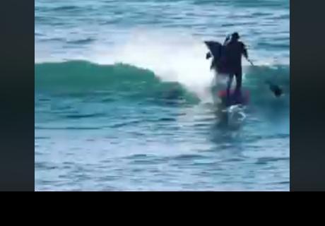 Delfín 'noquea' a surfista que se cruzó en su camino
