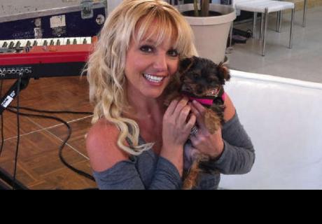 Perro aulla al ritmo de Toxic de Britney Spears y las redes sociales enloquecen
