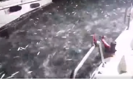 Sardinas sorprendieron a pescadores con increíble hecho