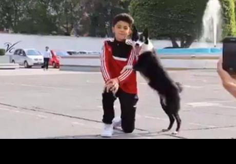 Perrito se vuelve famoso por saber posar para las fotos