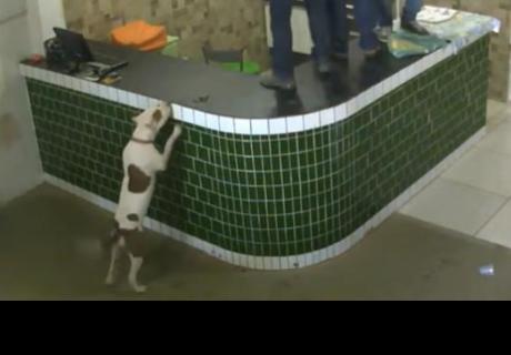 Trabajadores entran en pánico al ver a un pitbull, pero se llevan tremenda sorpresa