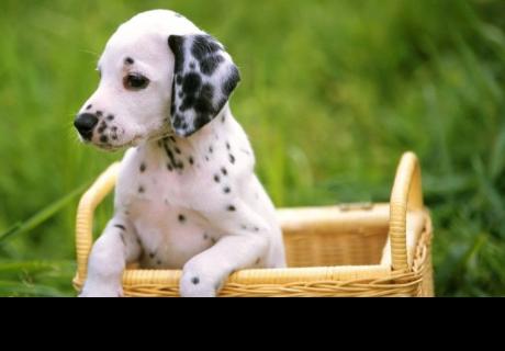 6 tips esenciales para entrenar a tu cachorro