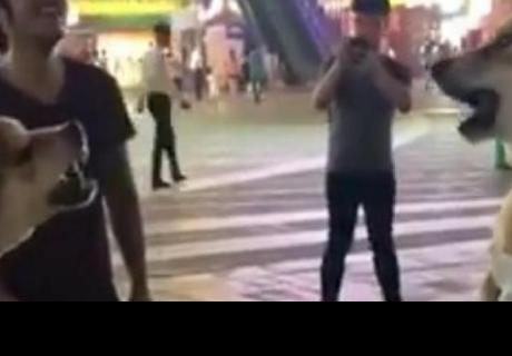 El inesperado final de una pelea entre dos perros hace reír a cibernautas