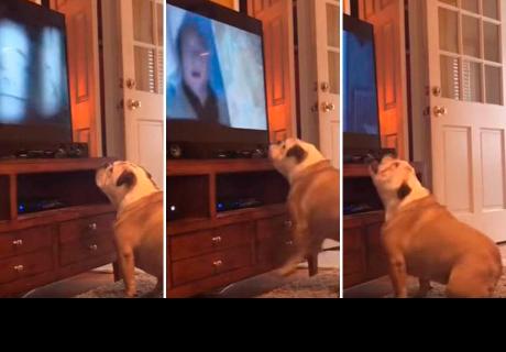 Esta es la reacción de un perro al ver la escalofriante escena de una película de terror