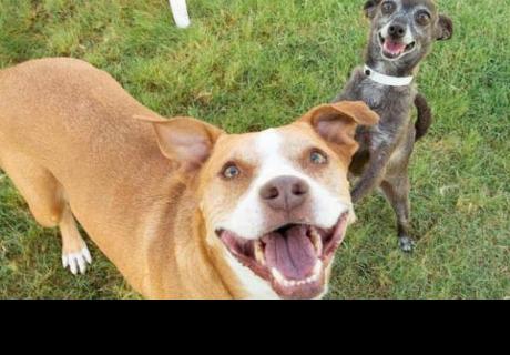 Perritos se niegan a dejar refugio a menos que sean adoptados juntos