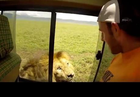 Muchacho intentó acariciar un león y se llevó el susto de su vida
