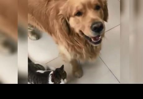 Perrito obliga a gato a tomarse una foto juntos