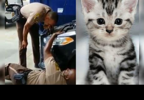 Policías de Miami rescataron a gatito atrapado en el interior de un auto