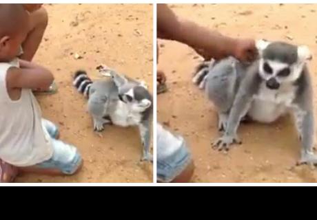 Se viraliza un tierno video de un lémur y dos niños