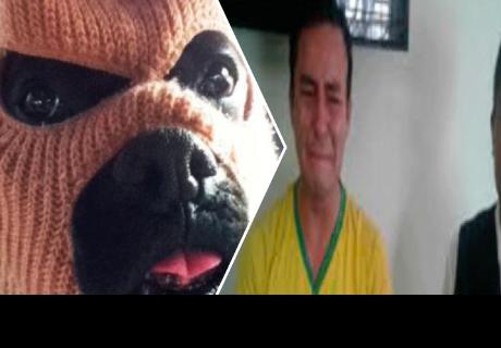 Perro delata a su dueño delincuente y se lo lleva la policía