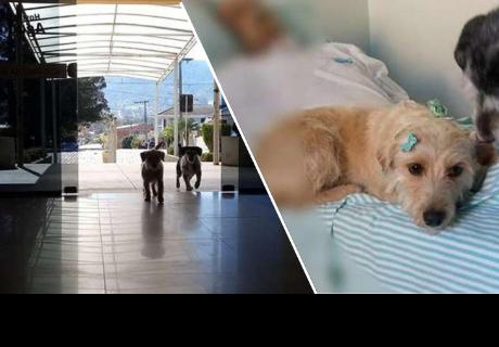 Perros durmieron por varios días fuera de un hospital hasta que su dueño se recupere