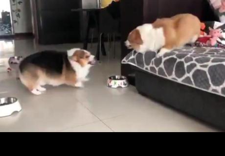 Dos perros protagonizan la pelea más tierna y cibernautas quedan 'enamorados'