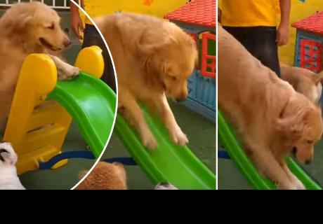 Perritos jugando en tobogán se 'roban' el corazón de cibernautas