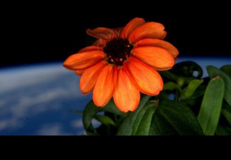 Astronauta cultiva hermosas flores en el espacio exterior