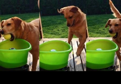 Perro que juega con un lanza pelotas emociona a todos en la red