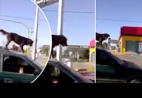 Le avisan que un perro estaba en el techo de su auto y su respuesta desató carcajadas
