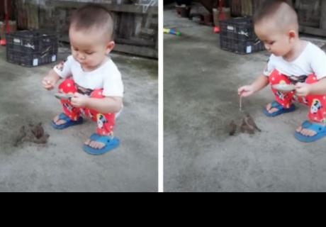 Niño da de comer a aves y su tierna acción se 'robó' el corazón de cibernautas