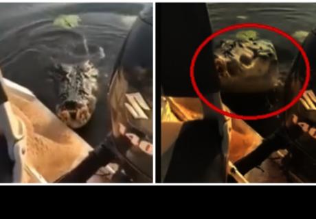 Un feroz cocodrilo ataca un bote de pesca y horroriza a dos pescadores