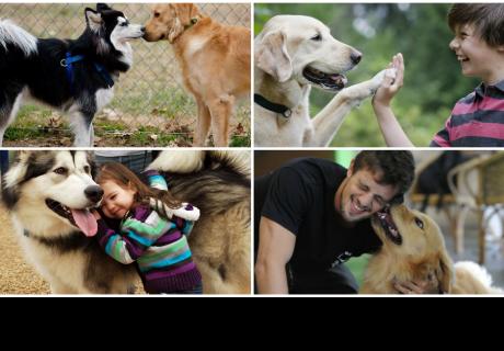 Un experimento prueba que los perros pueden hablar con los humanos