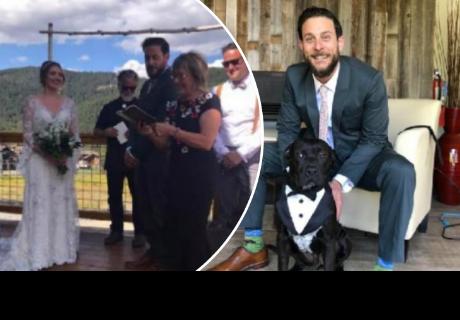 Novios eligen a su mascota como testigo de su boda y cibernautas quedan encantados