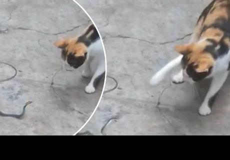 Un gato y una serpiente protagonizan pelea y sorprenden a todos en la red