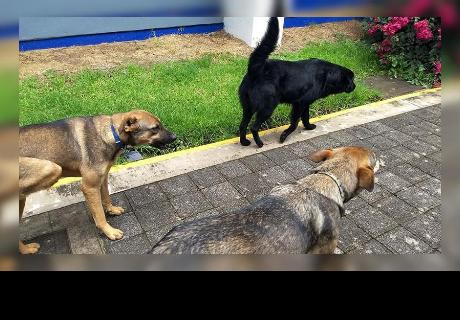 Tres perritos trabajan como seguridad en instituto mexicano y su historia conmueve a todos en la red