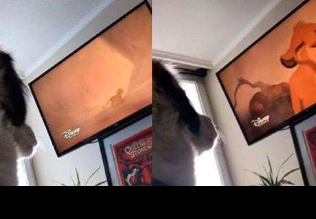 Perrita llora al ver triste escena de la película el 'Rey León'