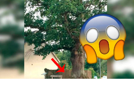 Sale a pasear y descubre que un árbol crece aterrador 'cerebro zombie' que sangra