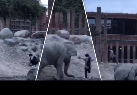 Ingresó al recinto de elefantes de un zoológico y casi pierde la vida