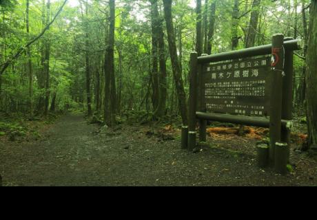 El misterioso bosque donde muchos se atreven a entrar, pero algunos no vuelven...