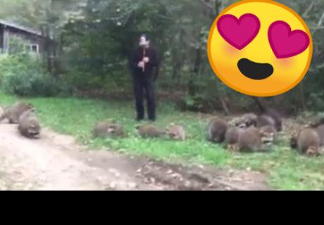 Un joven de Nueva York atrae del bosque a unos 20 mapaches con su flauta